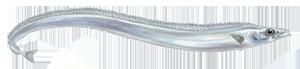 Pesce sciabola, pesce bandiera, pesce lama